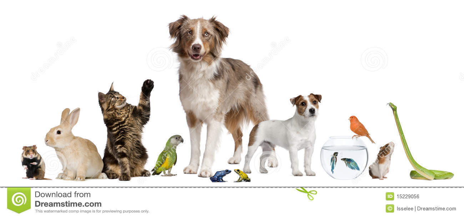 Gruppe Haustiere Zusammen Stockfoto. Bild Von Katze