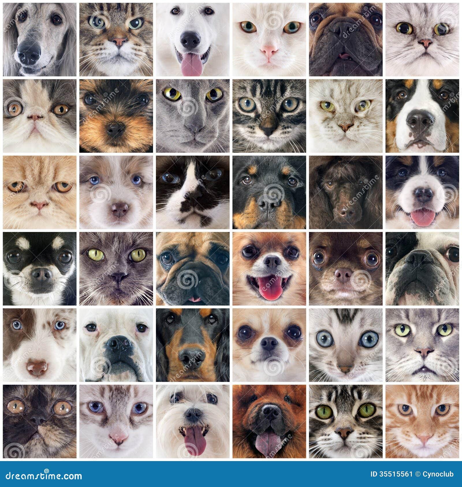 Gruppe Hunde und Katzen