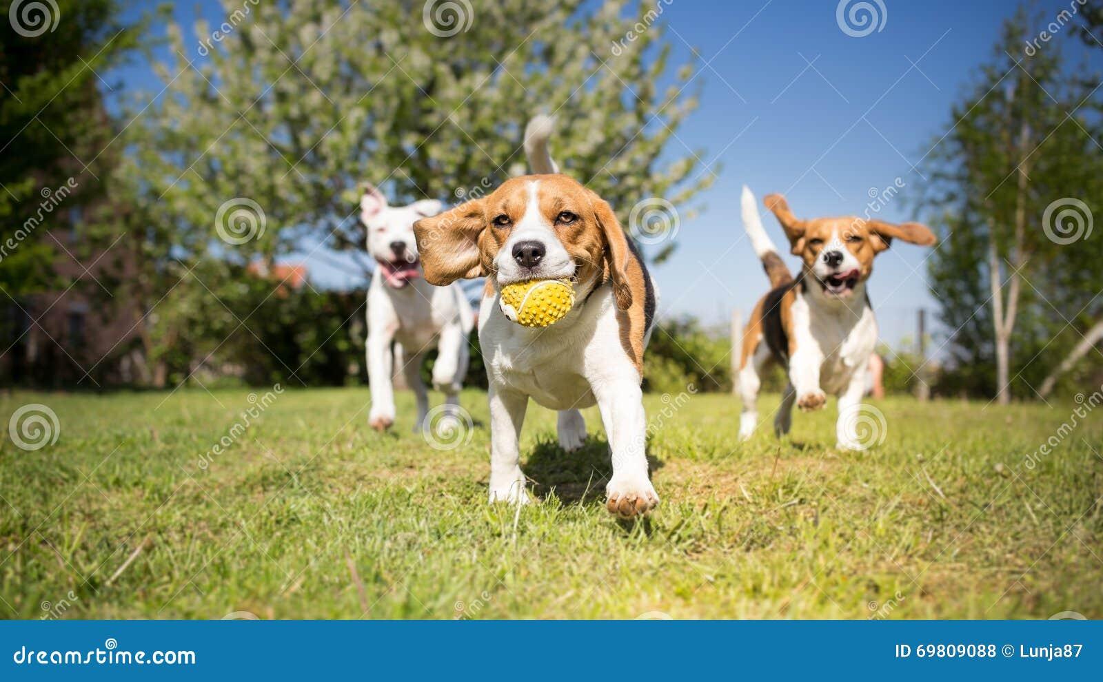 Gruppe Hundedes spielens