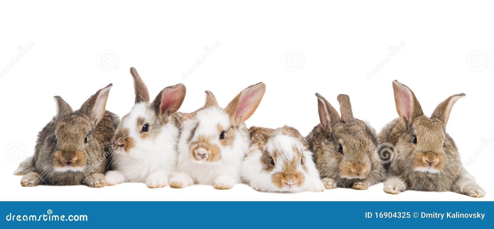 gruppe kaninchen in einer reihe stockbild bild von f nf braun 16904325. Black Bedroom Furniture Sets. Home Design Ideas