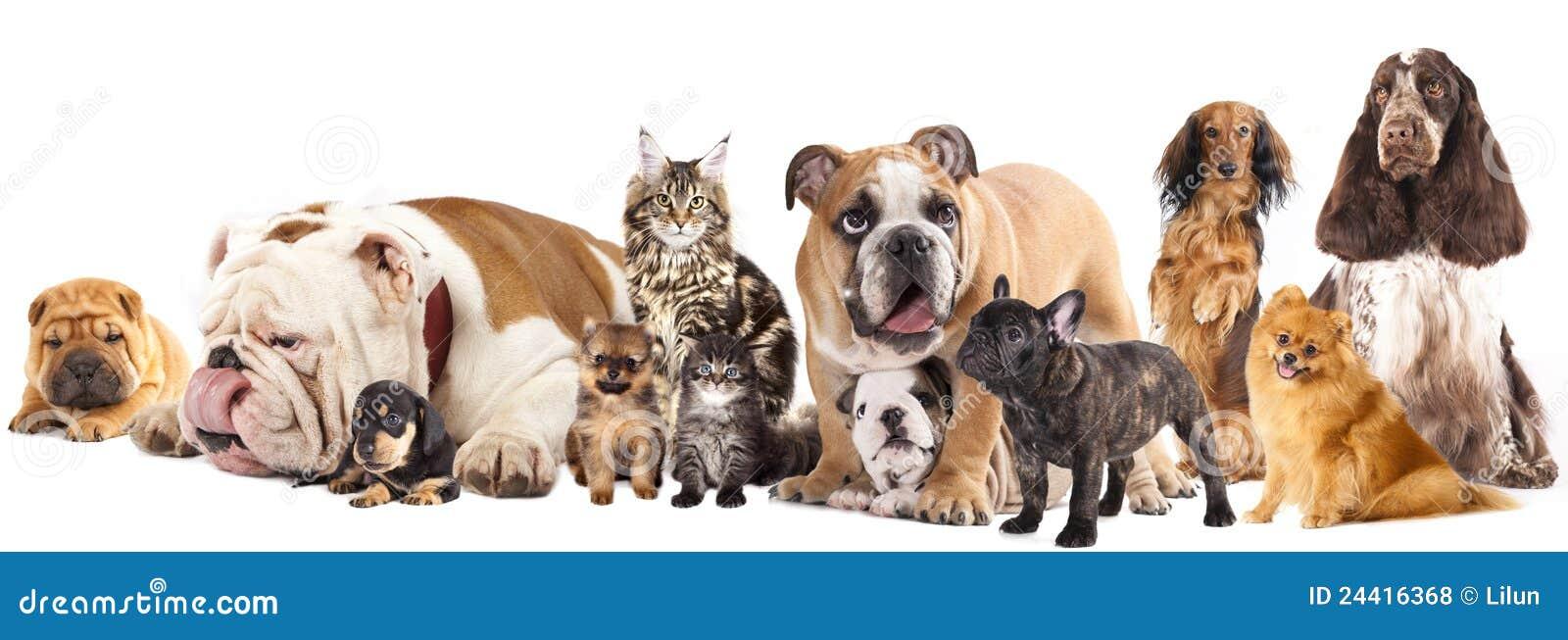 gruppe katzen und hunde lizenzfreie stockfotos  bild