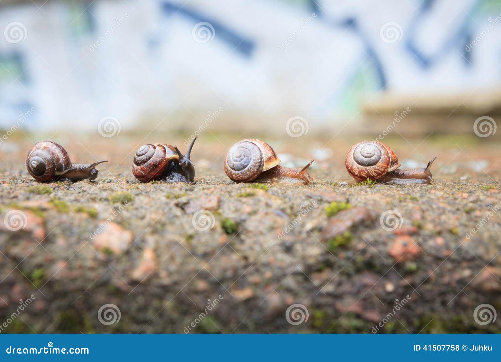 Gruppe kleine schnecken die vorw rts gehen stockfoto for Kleine esstisch gruppe