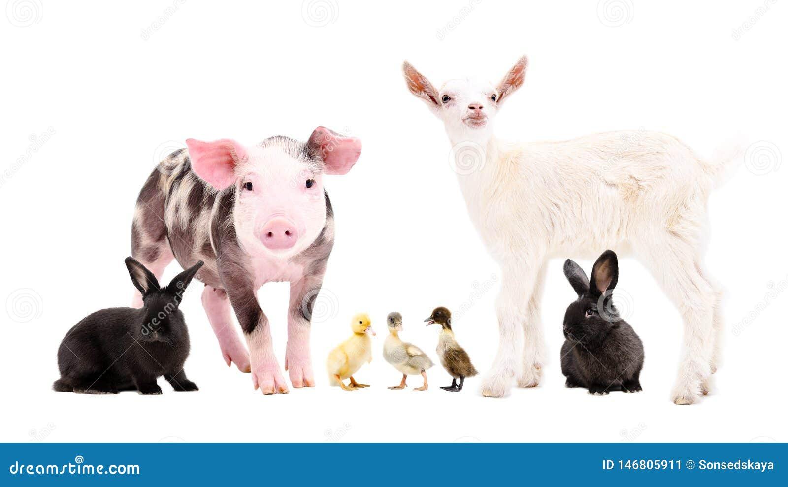 Gruppe nette Vieh zusammen