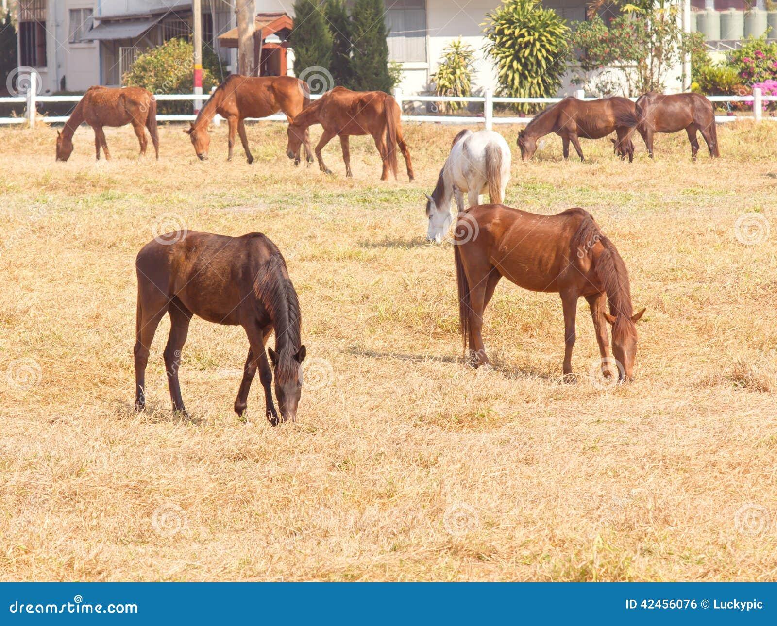 Gruppe Pferde auf einer Wiese im Bauernhof