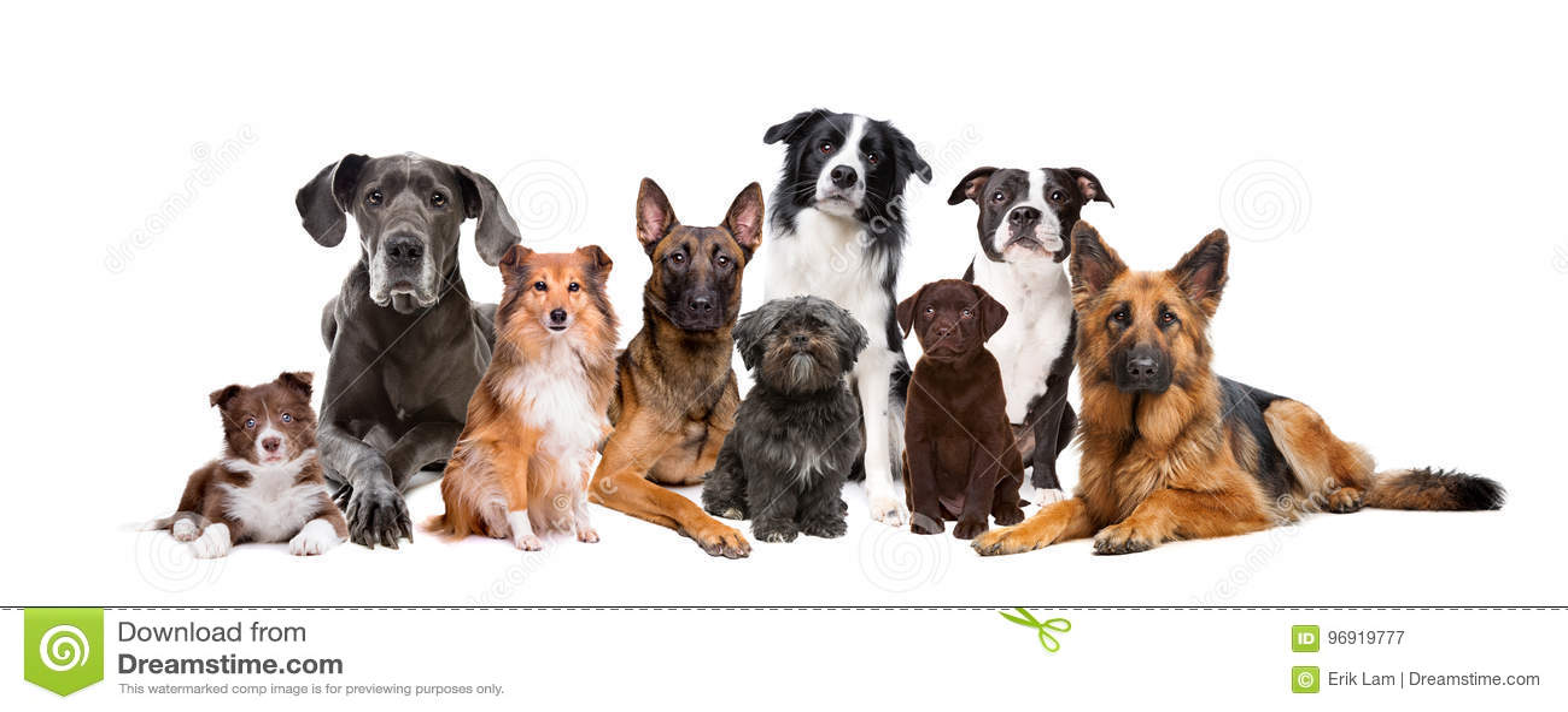 Gruppe von neun Hunden
