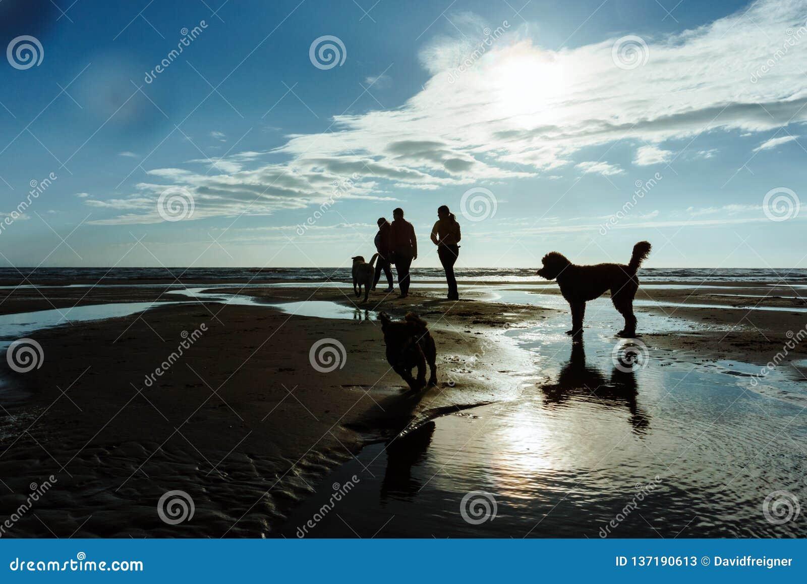 Gruppe von Personen mit ihren Hunden am Strand