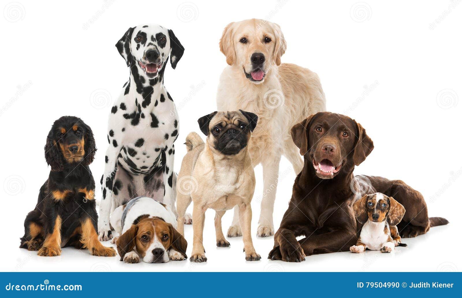Gruppe Zuchthunde