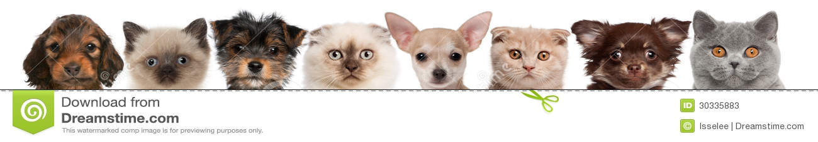 Gruppen av kantjusterat beskådar av katt och förföljer huvud