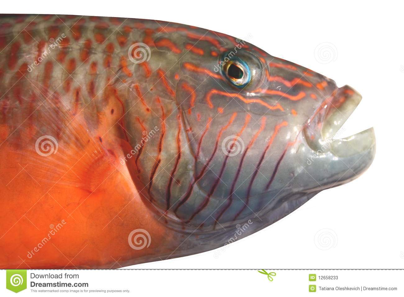 Grupper Fish With Opened Mouth Stock Image - Image of ...