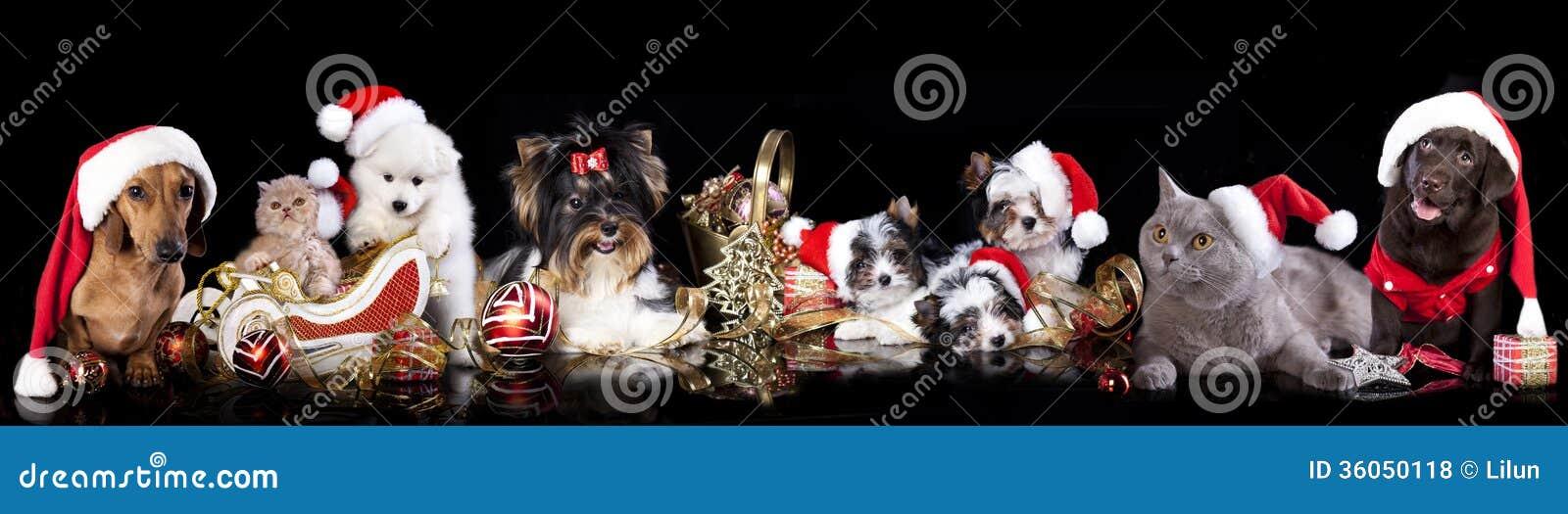 Gruppera hunden och katten och kitens som bär en santa hatt