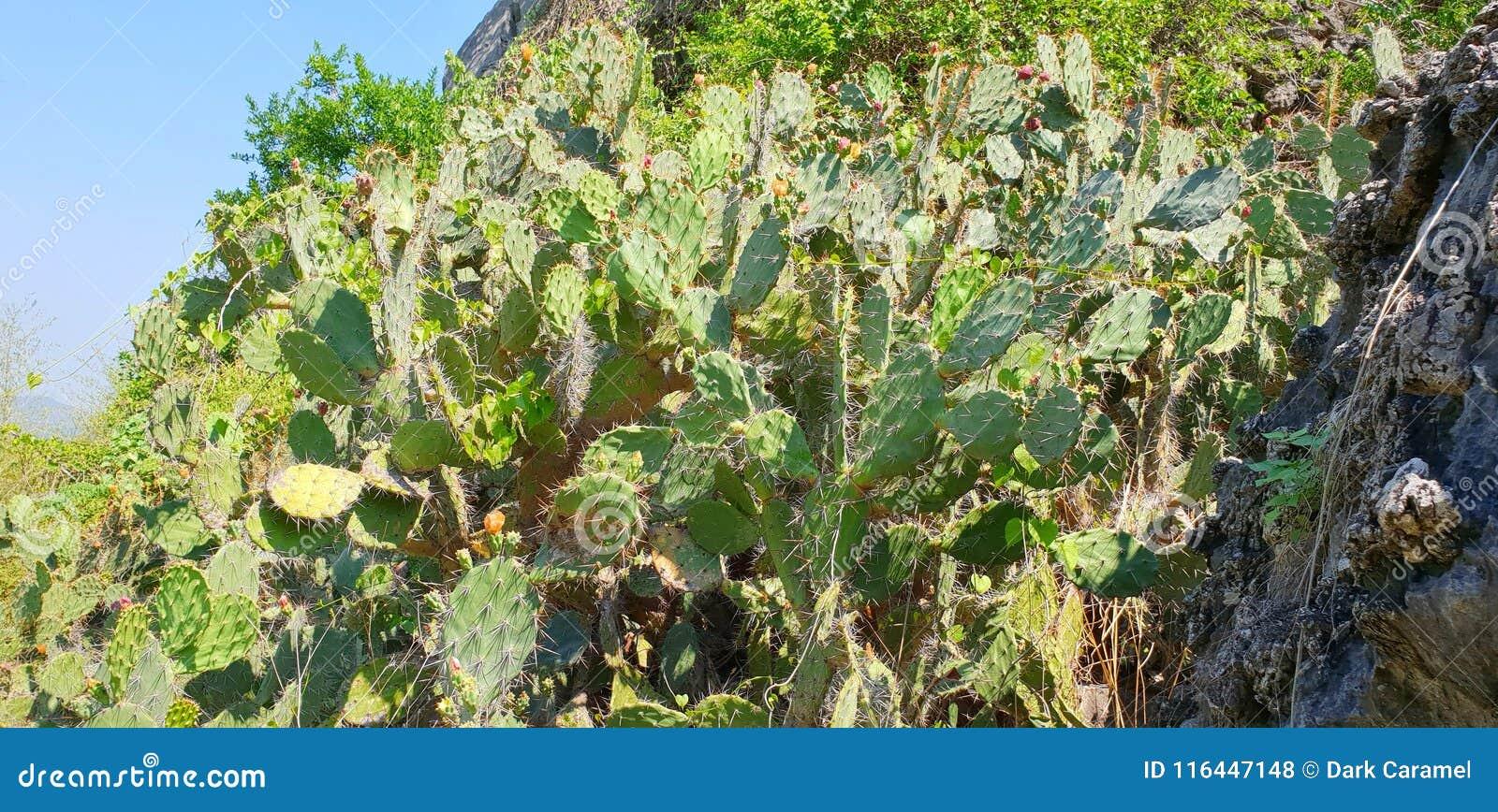 Gruppo del cactus sul fondo del cielo blu spine del cactus,