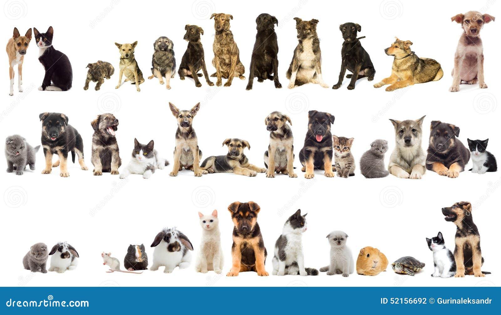 Gruppo Di Animali Domestici Fotografia Stock Immagine Di Amicizia