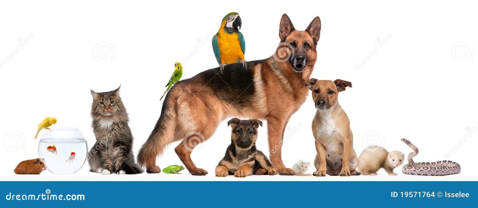 Gruppo di animali domestici che si siedono davanti alla priorità bassa bianca