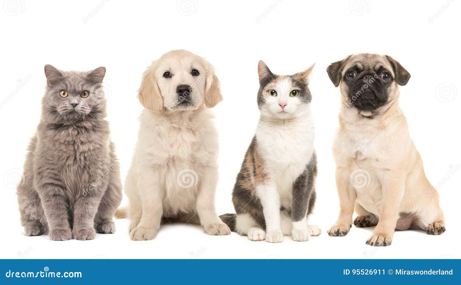Gruppo Di Animali Domestici Di Cuccioli Di Cane E Di Gatti Adulti