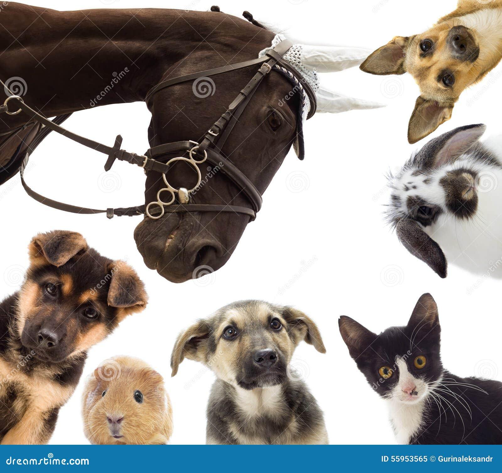 Gruppo Di Animali Domestici Differenti Immagine Stock Immagine Di