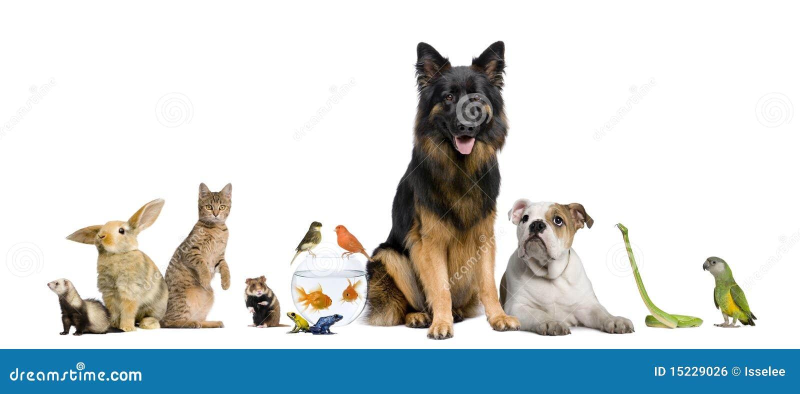Gruppo di animali domestici insieme immagine stock libera for Rivista di programmi domestici