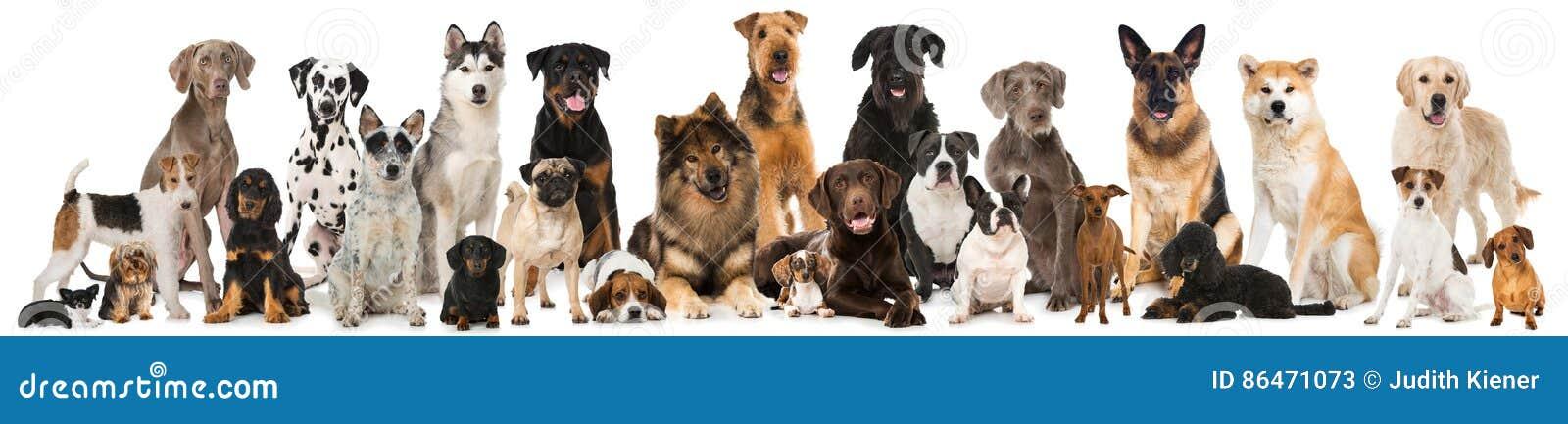 gruppo di cani della razza immagine stock immagine di akita 86471073. Black Bedroom Furniture Sets. Home Design Ideas