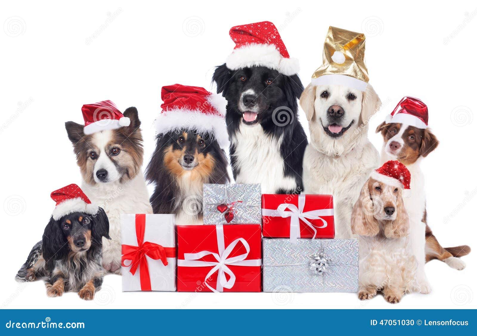 Immagini Natalizie Con Cani.Gruppo Di Cani Di Razza Con I Regali Di Natale Con I