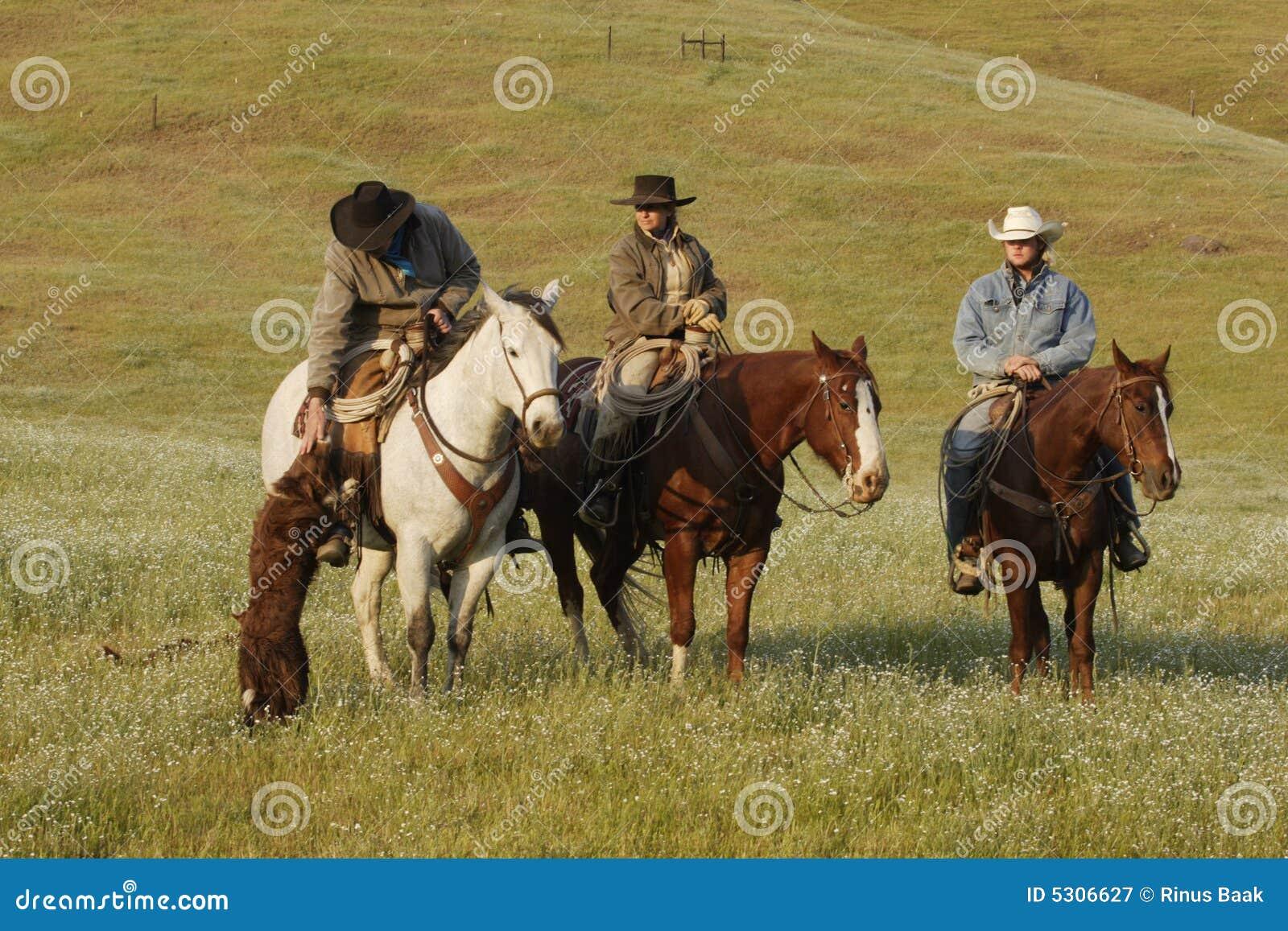 Download Gruppo Di Cowboy Con Il Cane Immagine Stock - Immagine di ranch, gruppo: 5306627