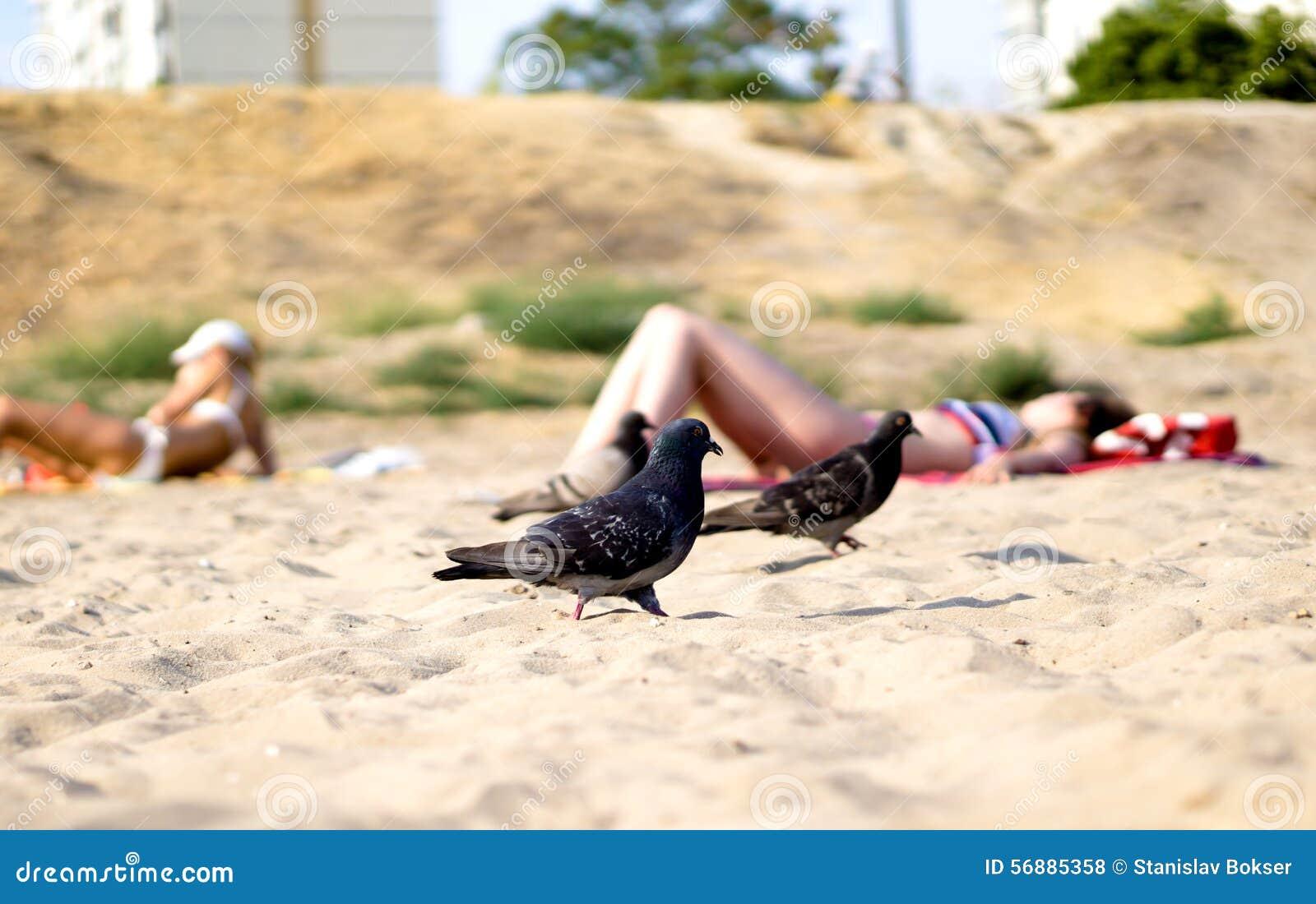 Gruppo di piccioni affamati