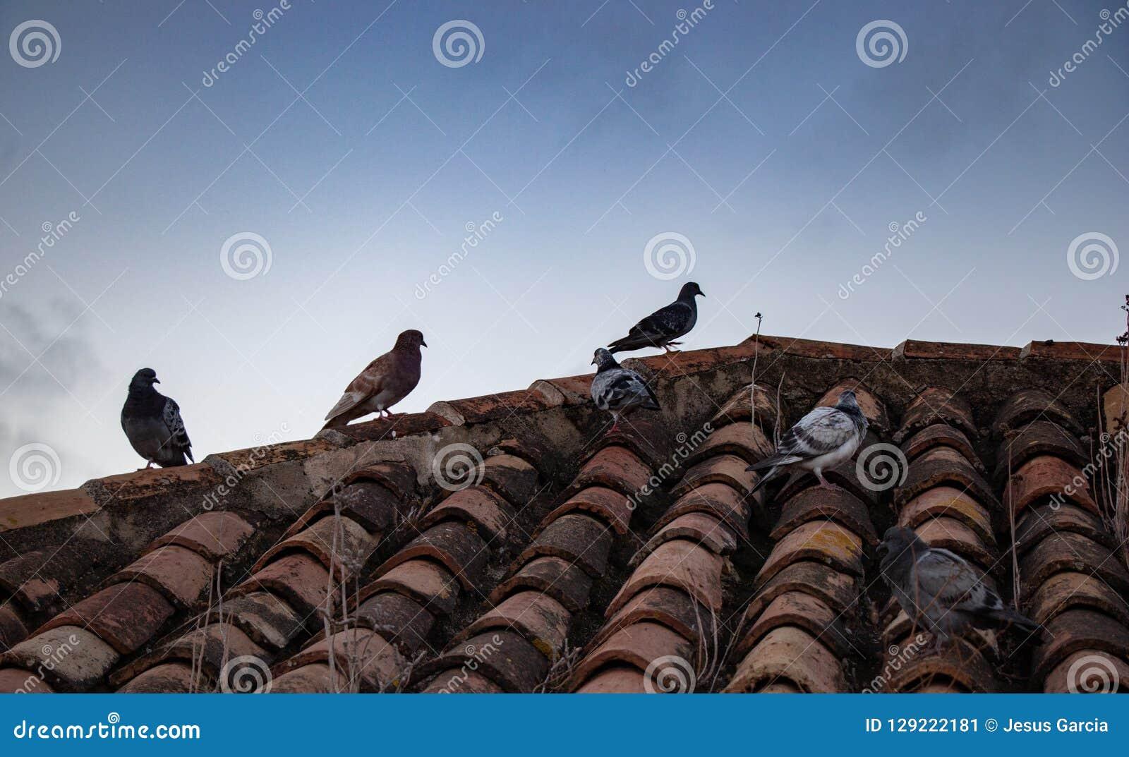Gruppo di piccioni dei colori differenti su un tetto