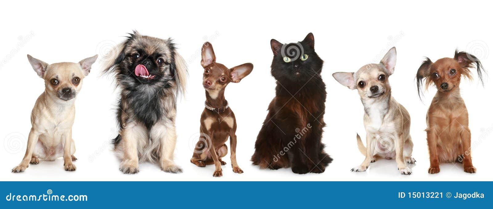 Gruppo di piccoli cani e di gatto