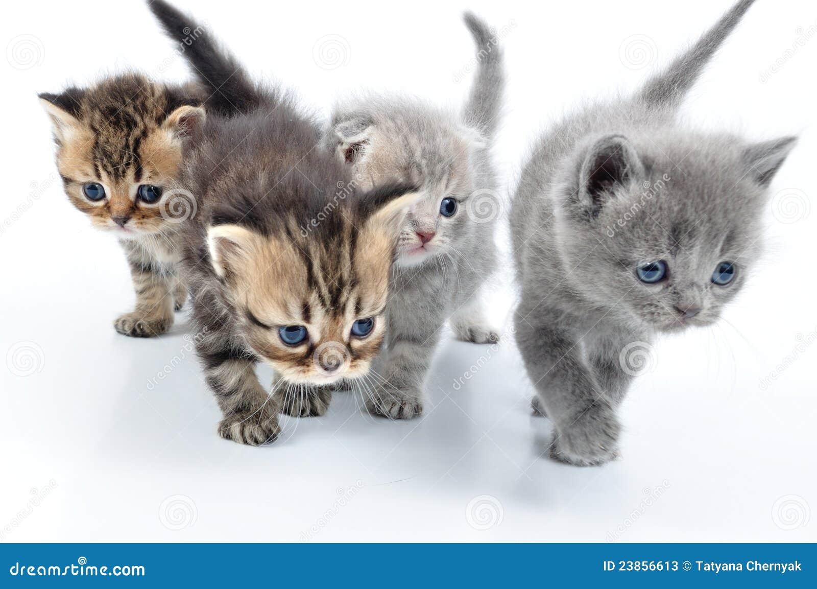 Super Gruppo di piccoli gattini immagine stock. Immagine di muoversi  FV15