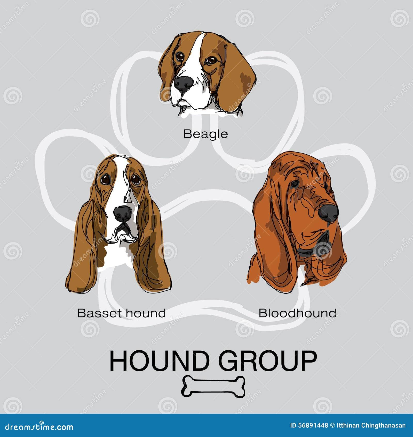 Gruppo pack1 del segugio del cane del fronte