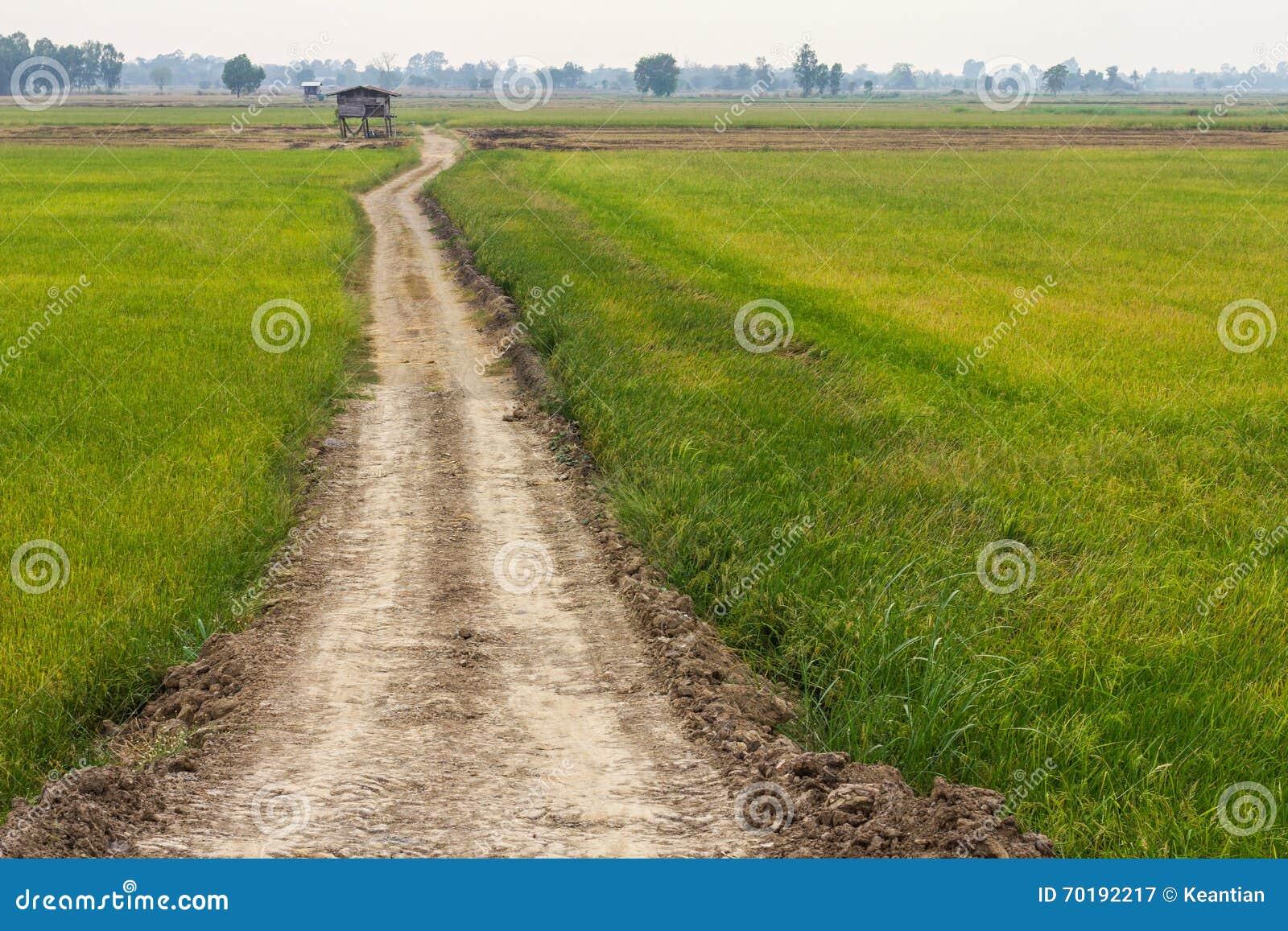 Grusväg till och med risfält