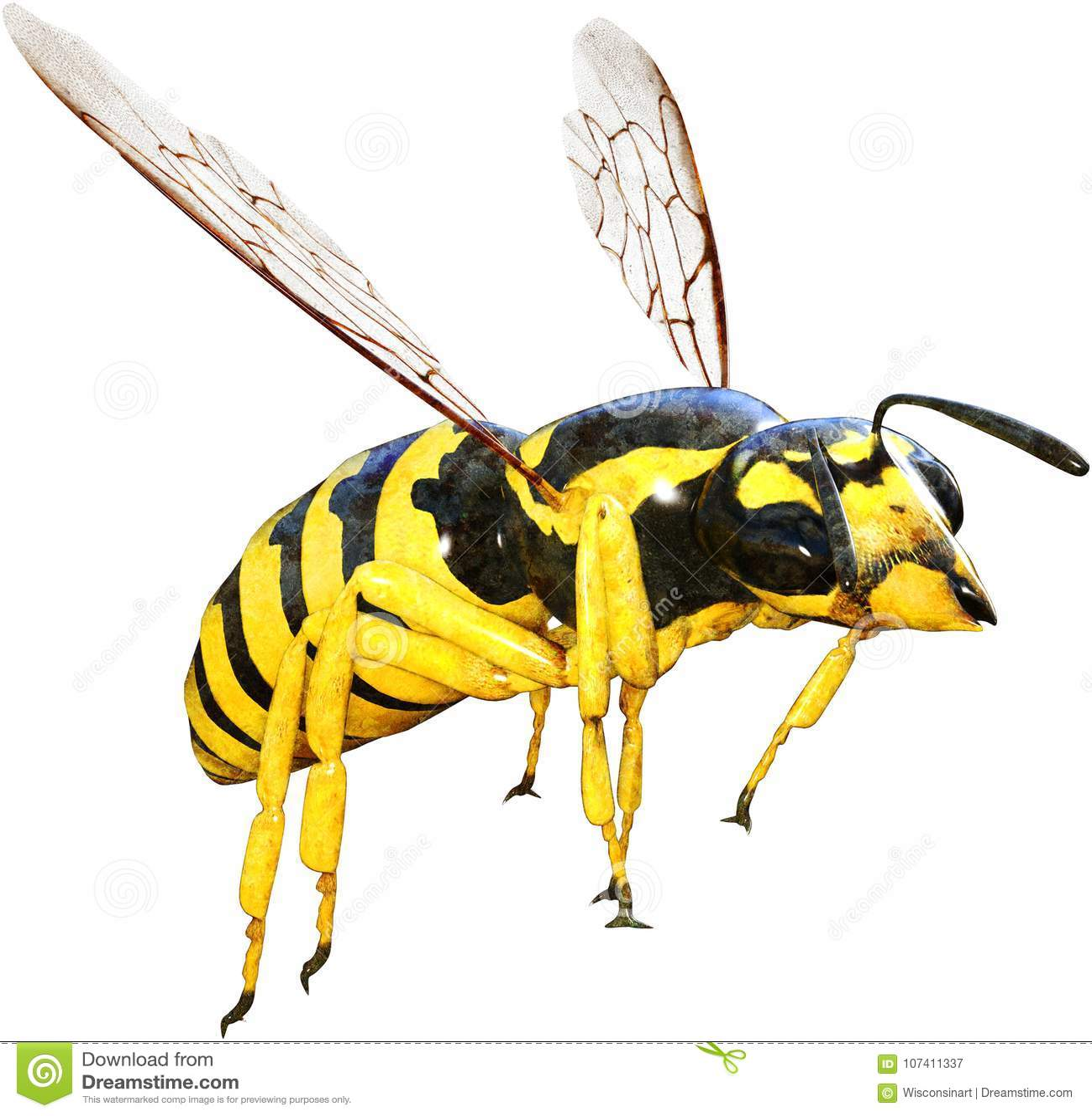 Guêpe, abeille, insecte, insecte, d isolement