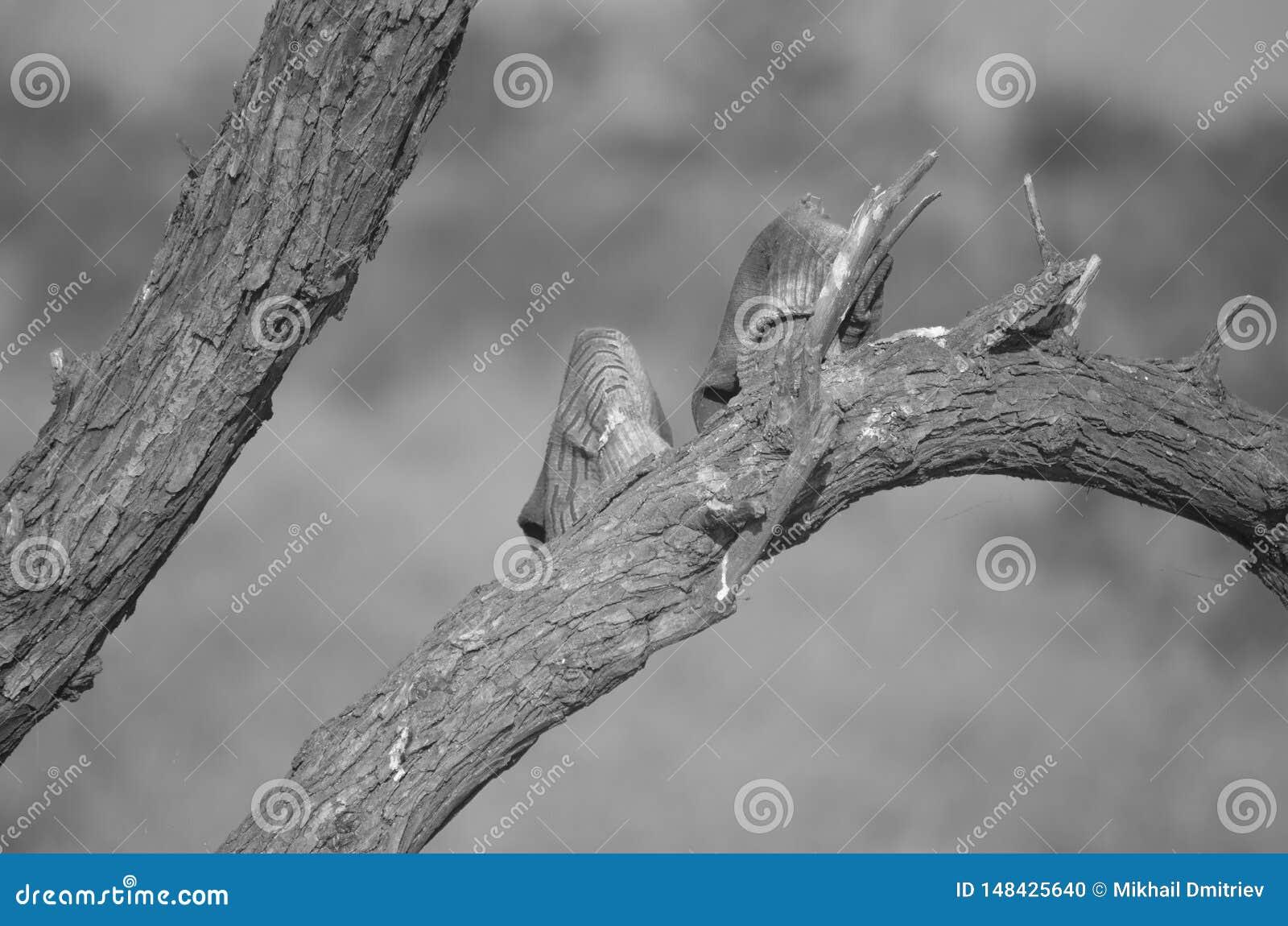 Guantes de trabajo sucios que cuelgan en un árbol para secarse