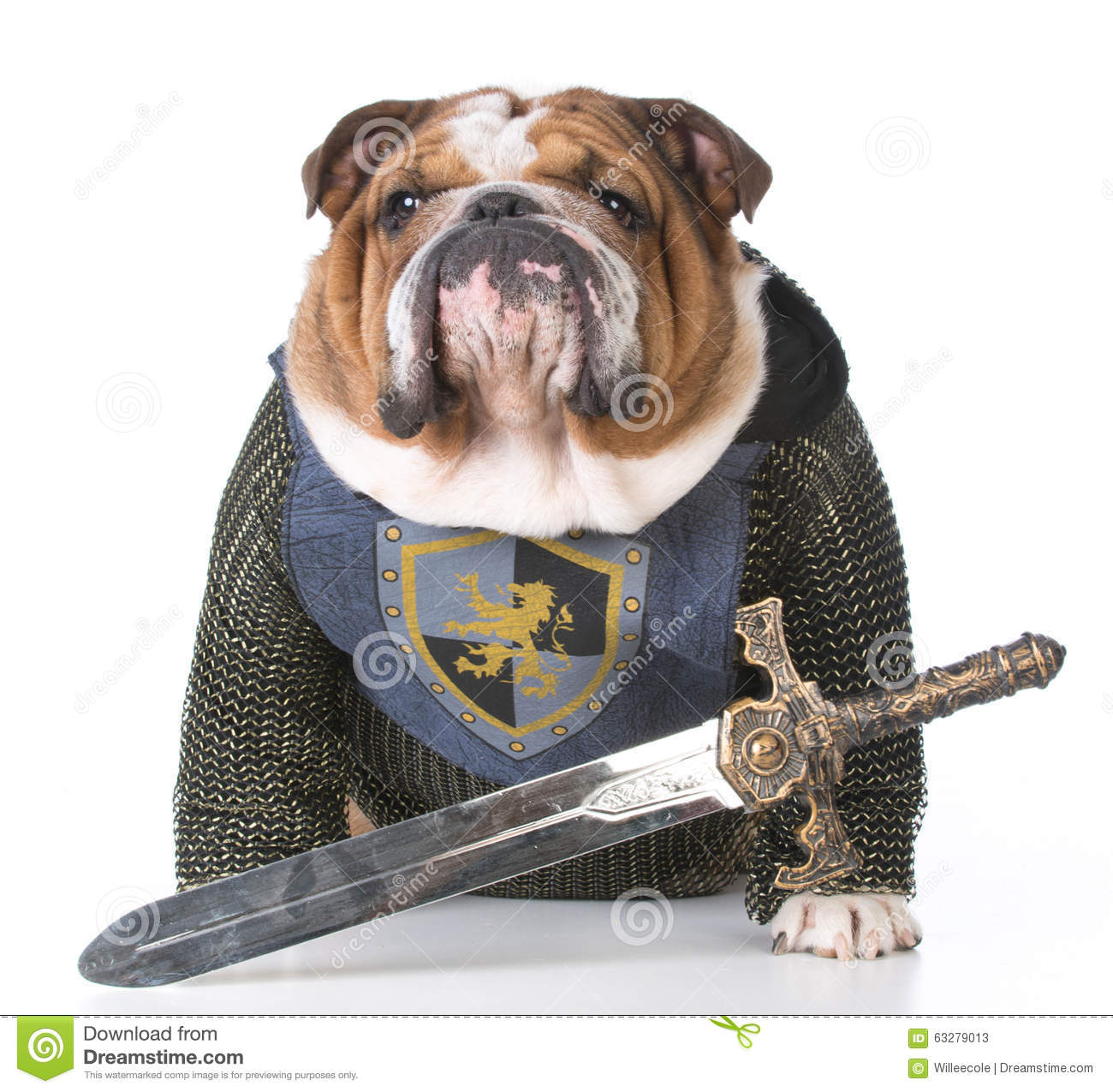 [Image: guard-dog-bulldog-dressed-up-like-knight...279013.jpg]