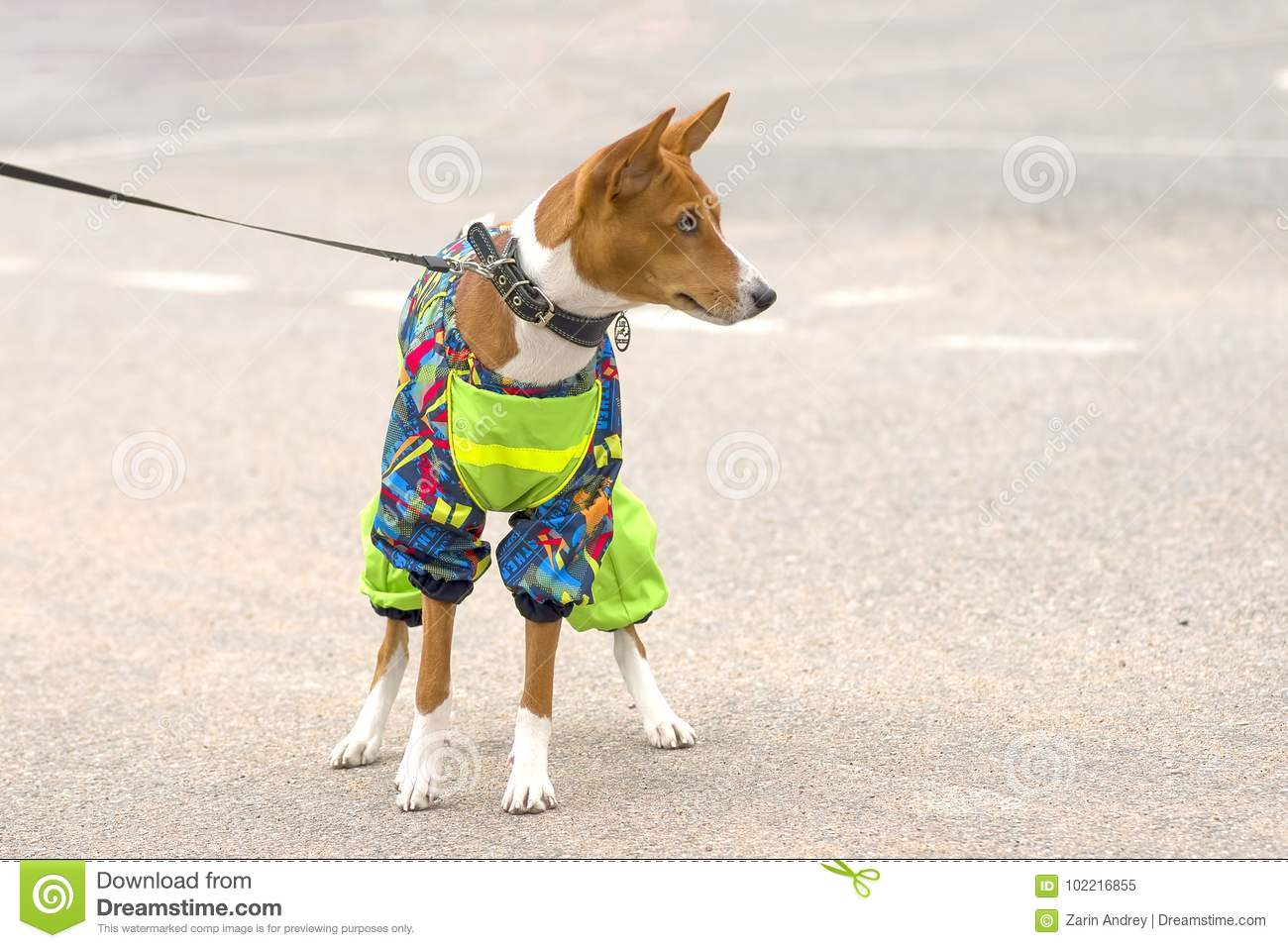 Guard dog close up stock image image of domesticated 102216855 - Dogs for small spaces concept ...