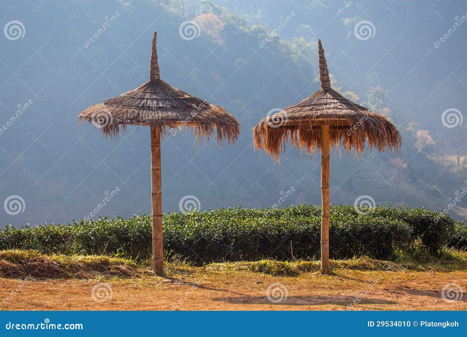 Guarda-chuvas da grama na plantação de chá
