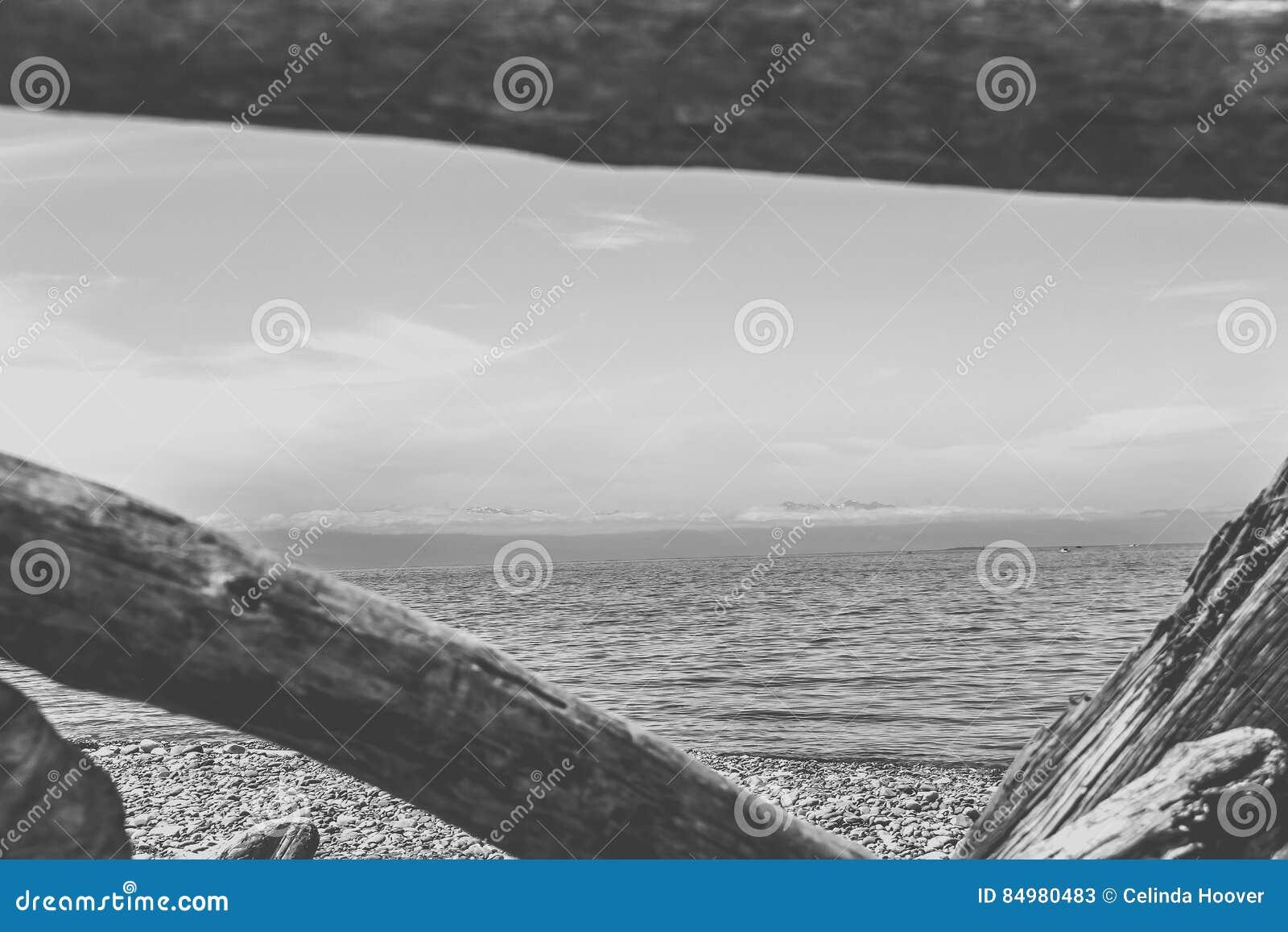 Guardando attraverso il legname galleggiante