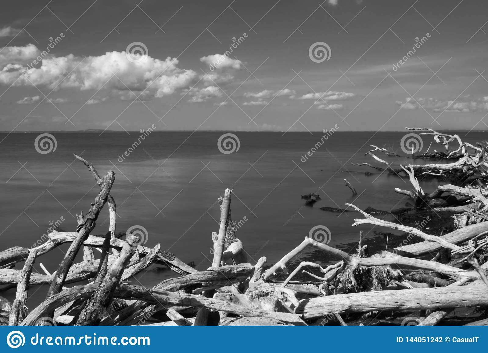 Guardando del sud attraverso l Oceano Atlantico, verso l orizzonte con legname galleggiante nella priorità alta, in bianco e nero