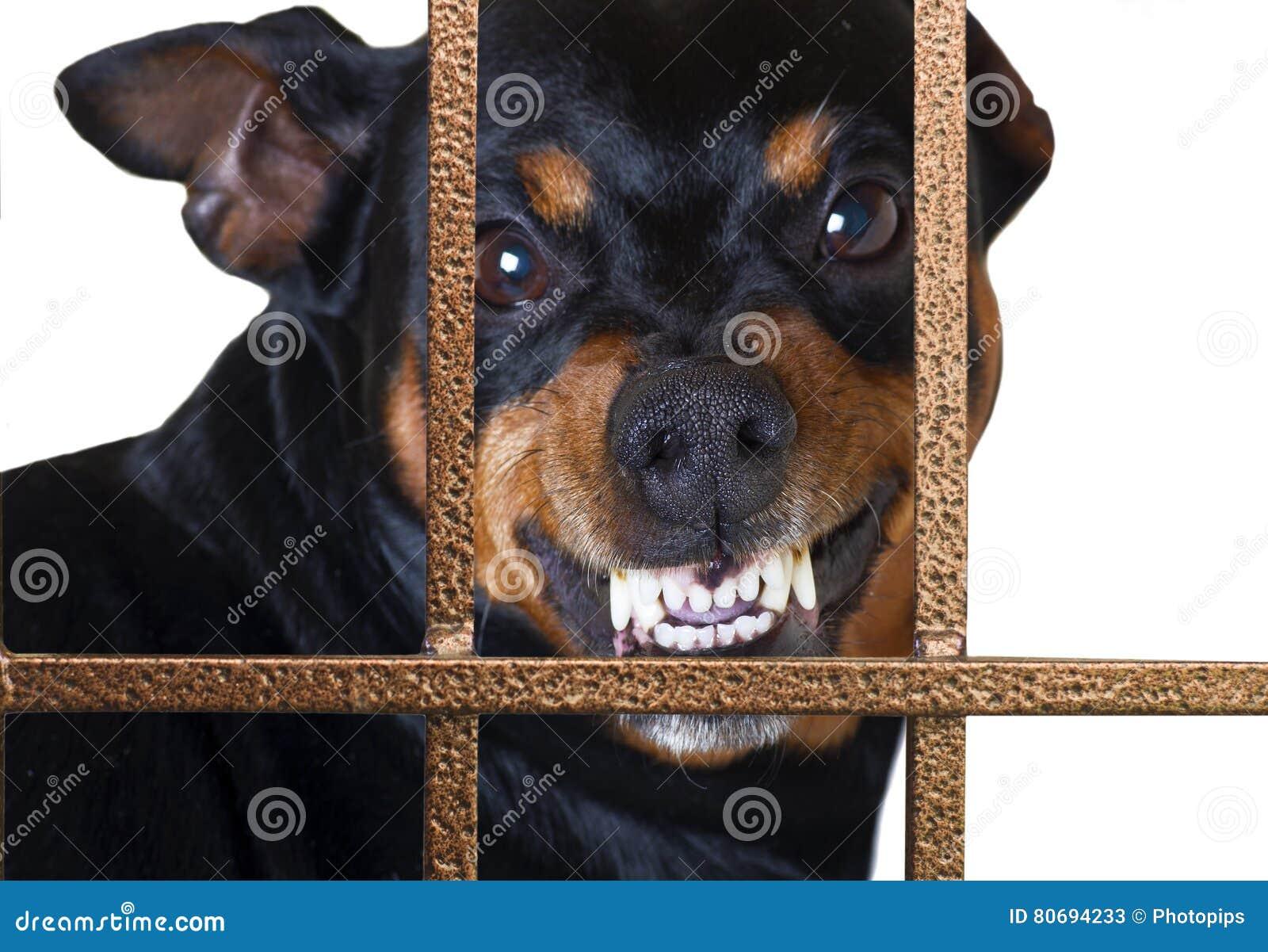Guardia di ringhio del cane
