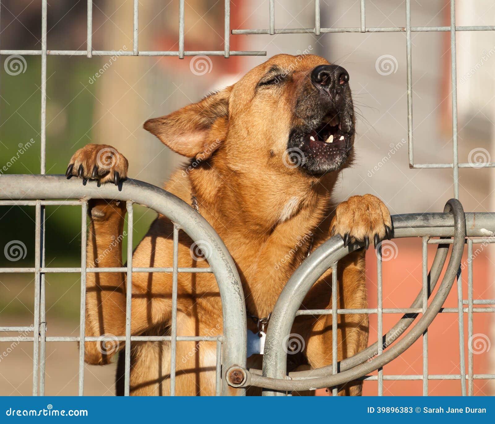 Guardia Dog Barking una advertencia detrás de una cerca de alambre