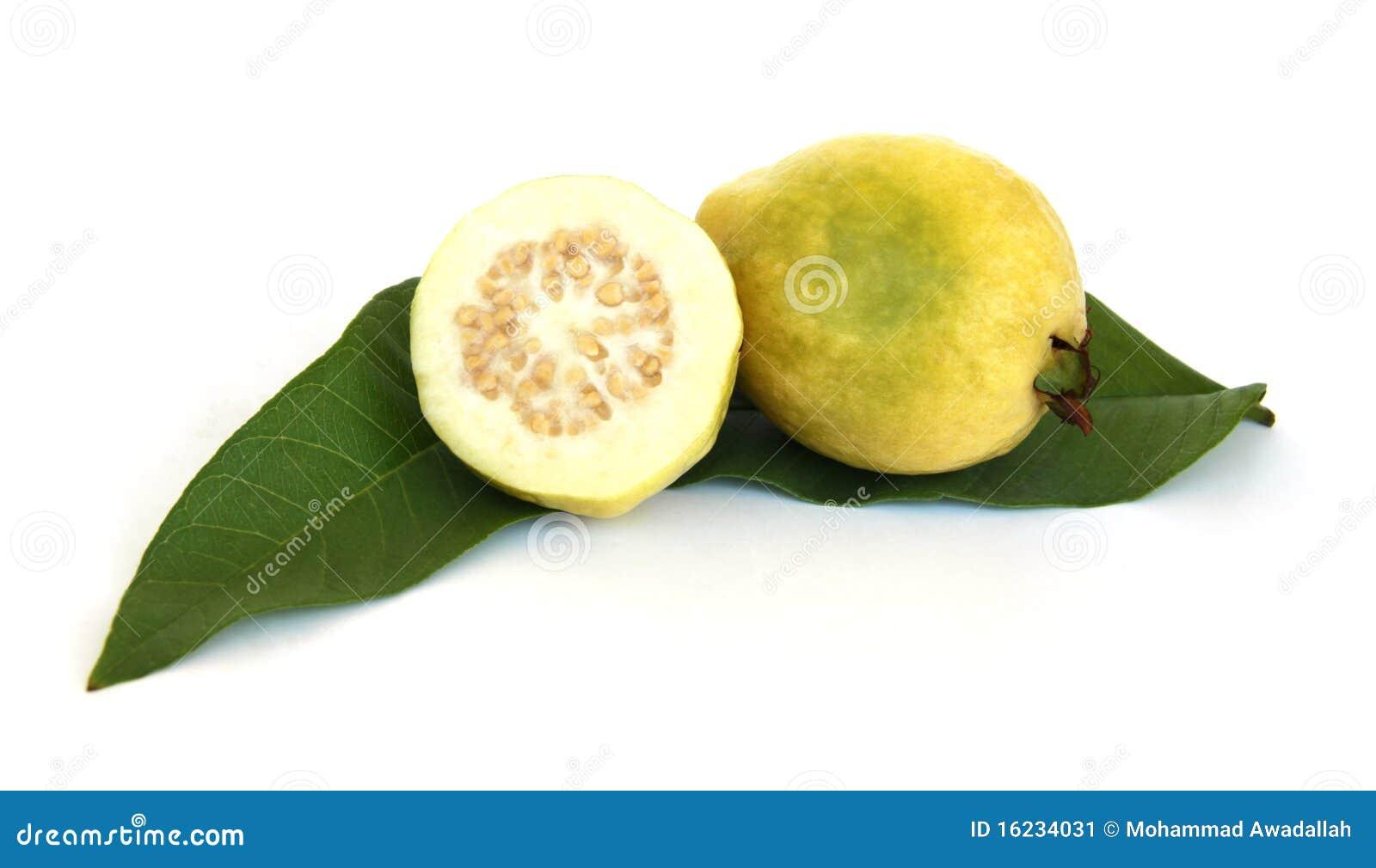 Guava zielony urlop