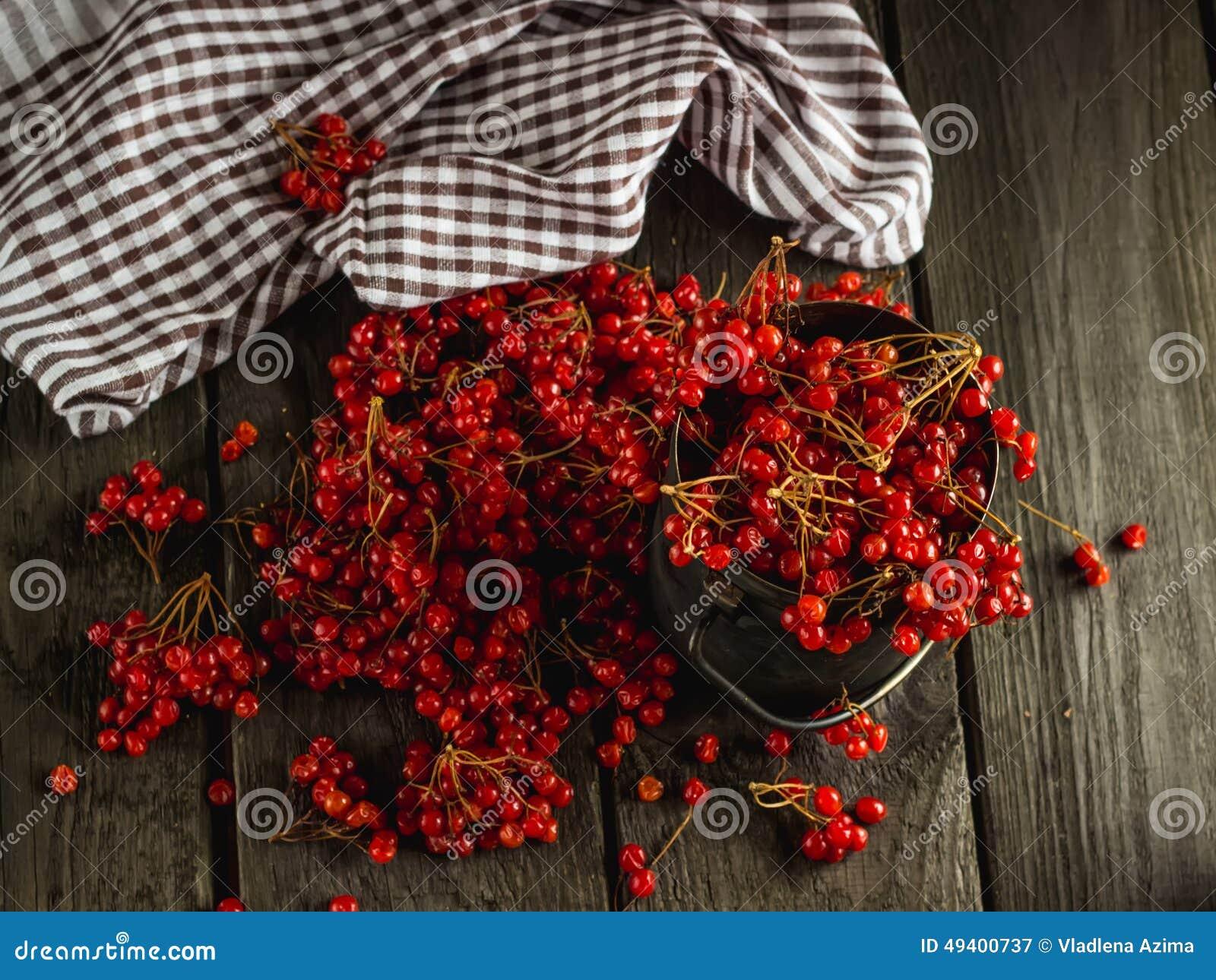 Download Guelder-Rose stockbild. Bild von stieg, winter, weinlese - 49400737