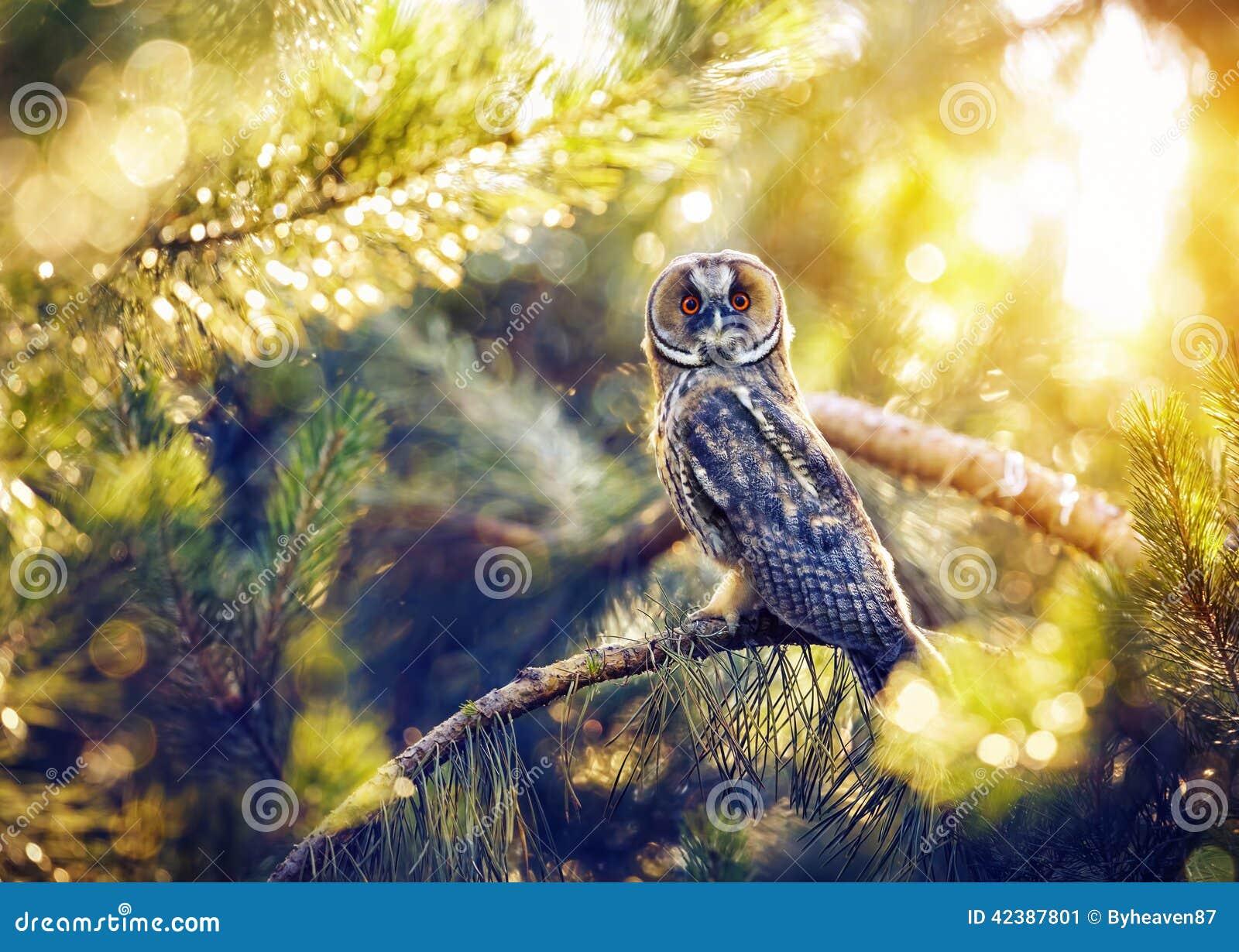 Gufo comune nella foresta