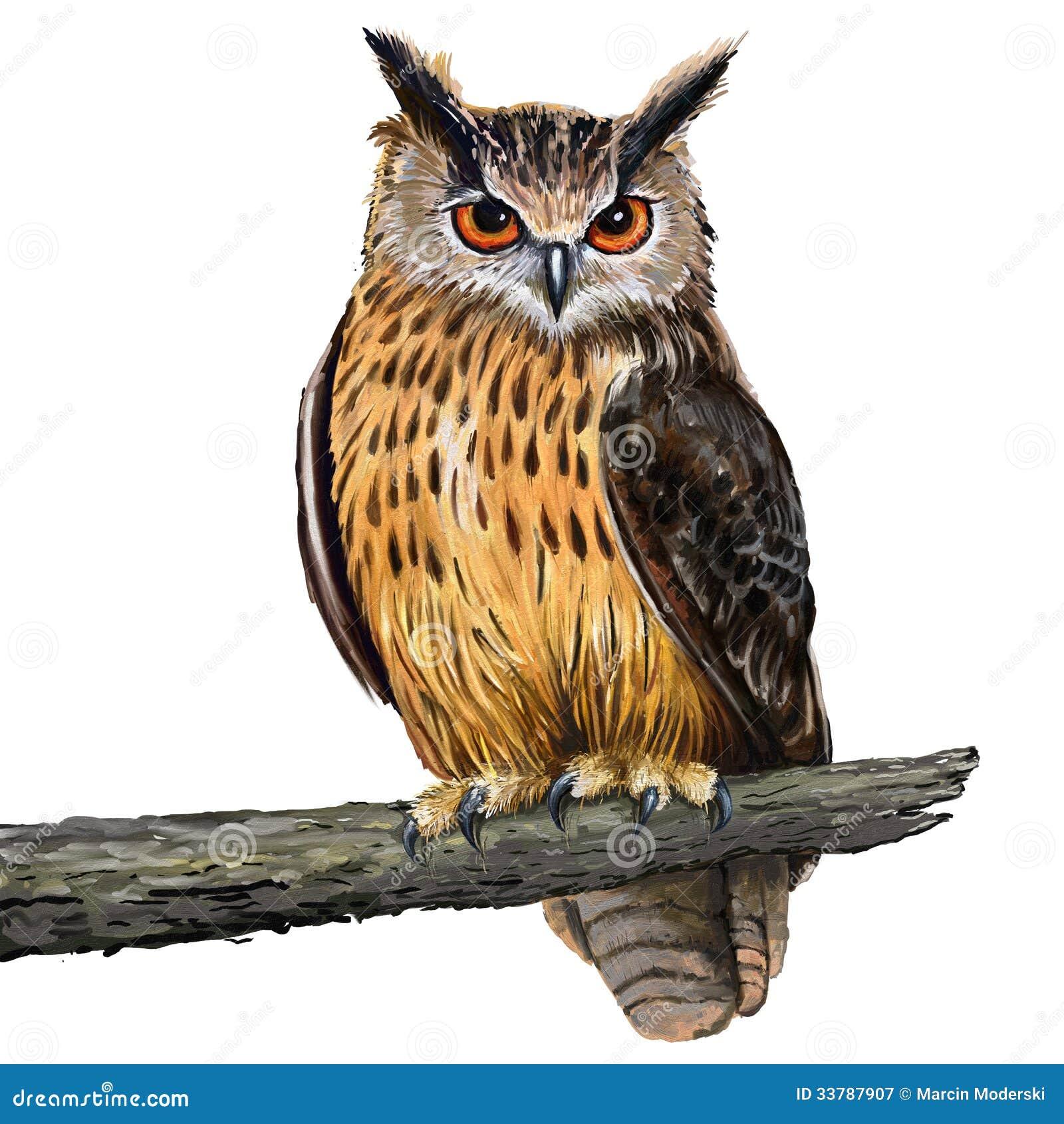 gufo reale illustrazione di stock immagine di olio eagle vector free eagle vector art