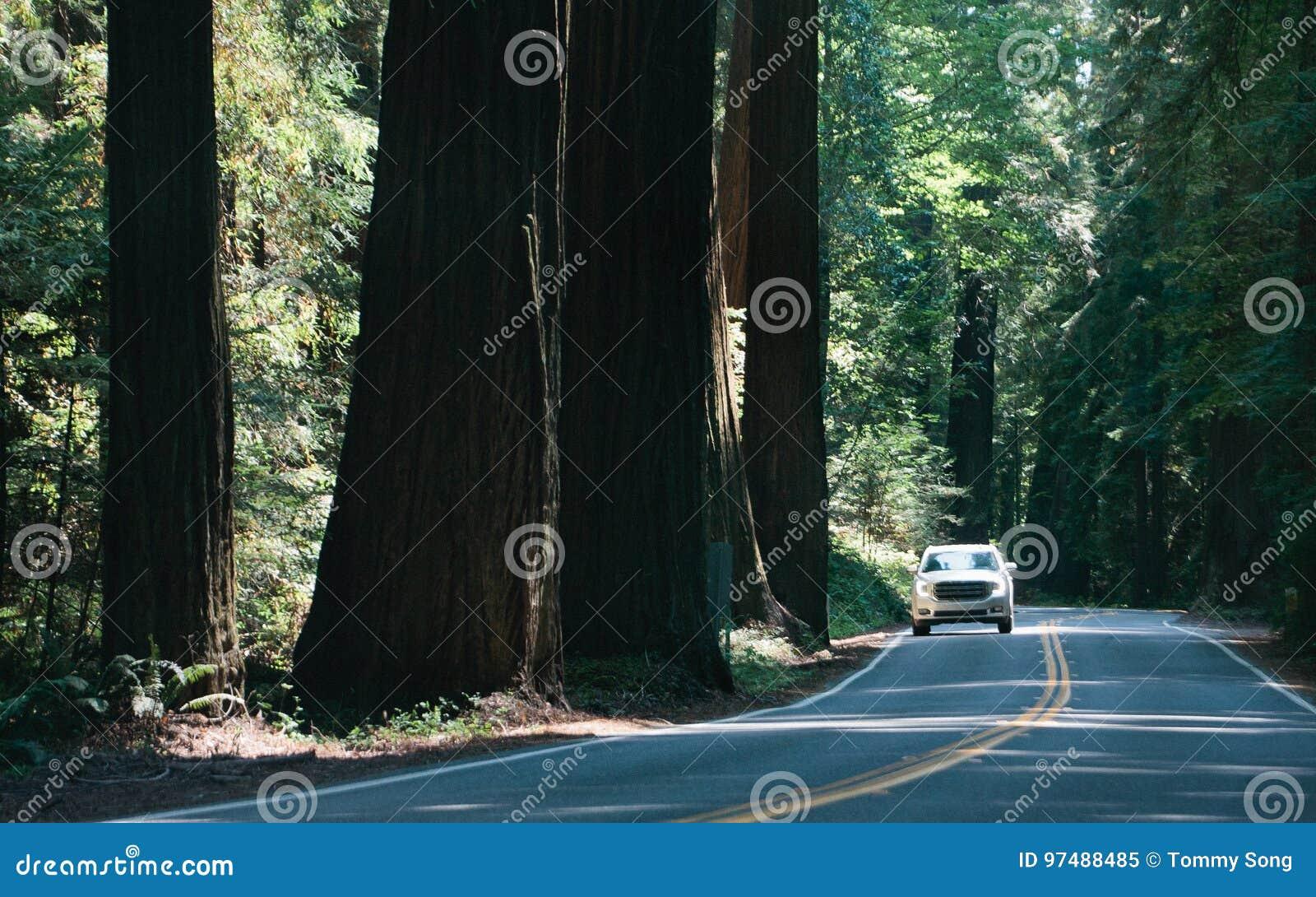 Guidando attraverso il viale di Giants
