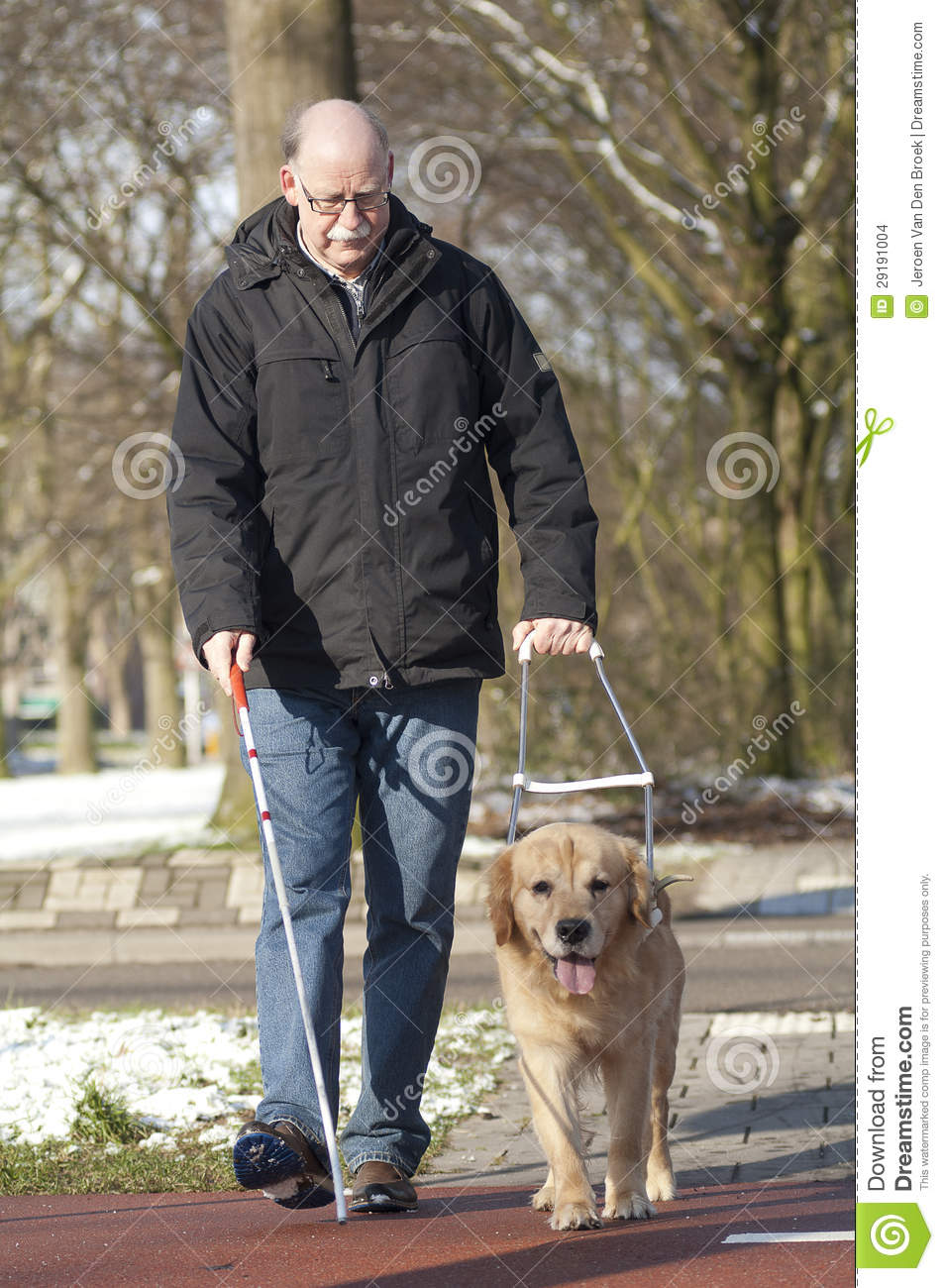 Guide Dog Is Helping A Blind Man Stock Photo Image 29191004