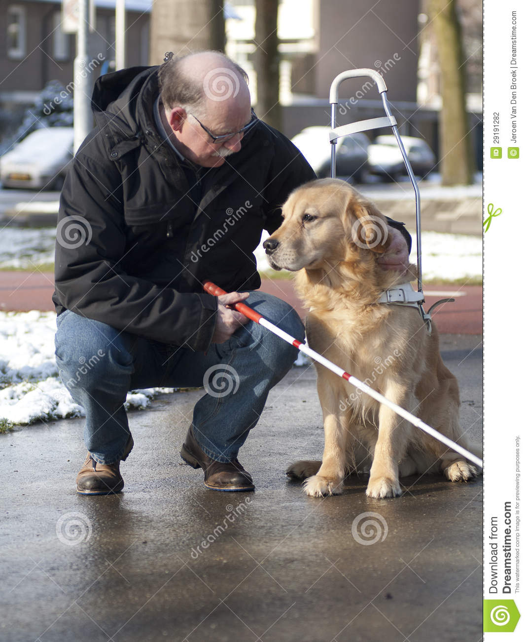 Guide Dog Is Helping A Blind Man Stock Photo Image Of
