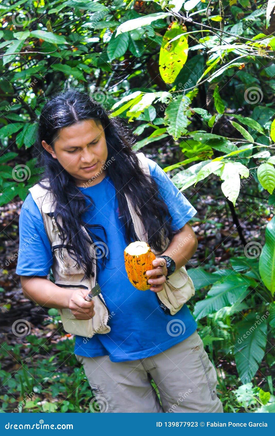 Guide indigène de l Equateur ouvrant un cacao
