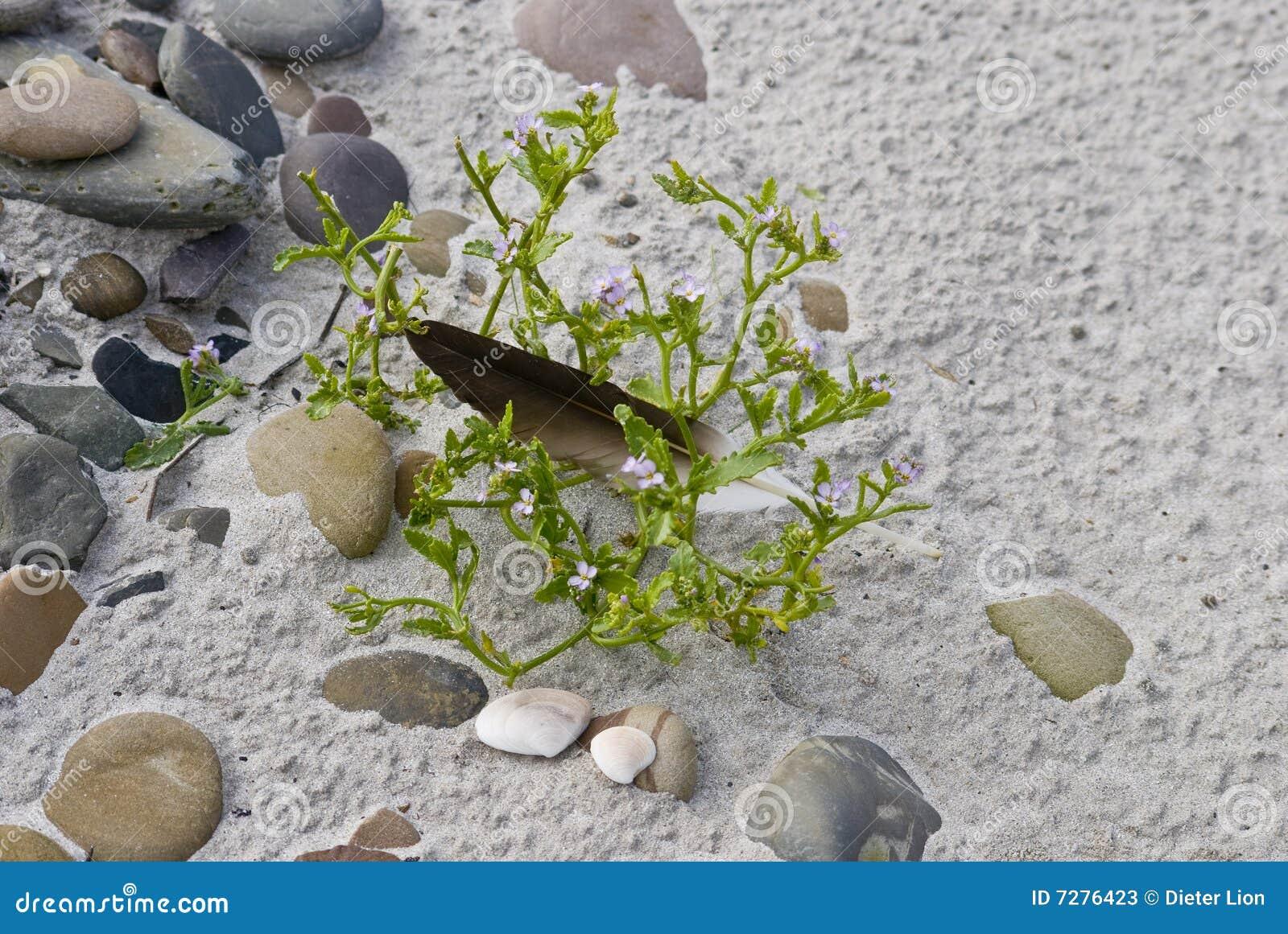 Guijarros y planta en la playa