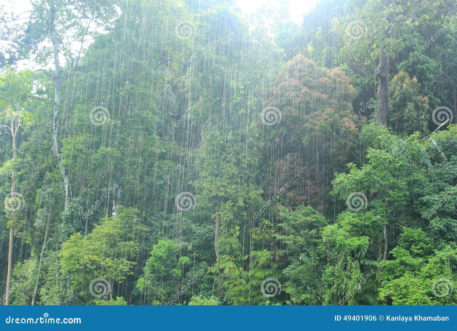 Download Guilin, Thailand stockfoto. Bild von regen, vegetation - 49401906