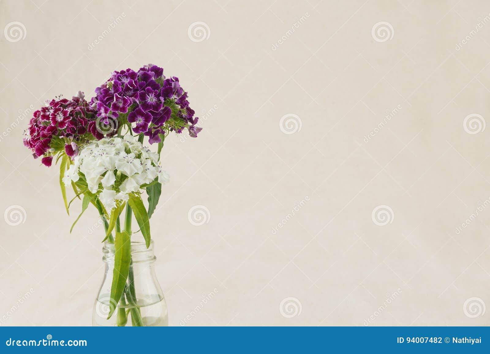 Guillermo dulce colorido florece el ramo
