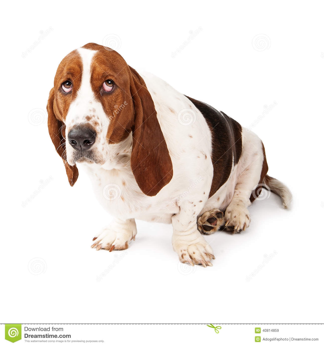 Free Guilty Dog Clipart